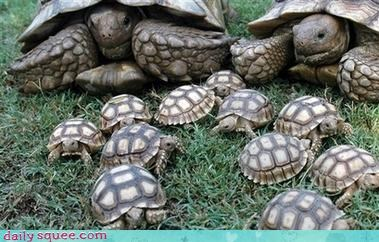 cute so many turtle - 3035874560