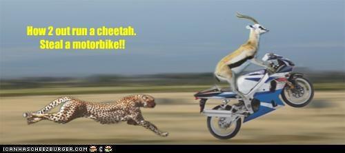 Cheezburger Image 3036235520