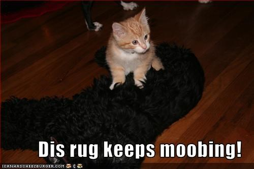 kitten lolcats moving on rug sitting whatbreed