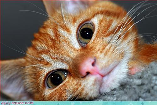 adorable cat kitten - 3037126144