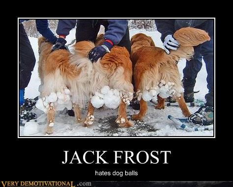 dogs nipping at your nose jack frost