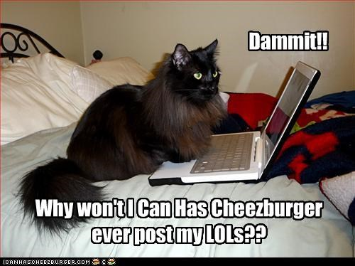 Cheezburger Image 3040114432