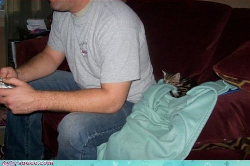 gamer,kitten,scared
