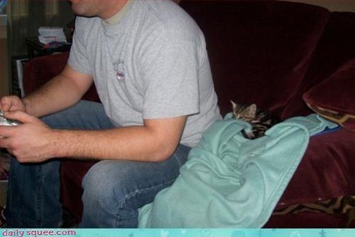 gamer kitten scared - 3040355584