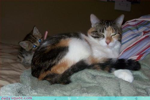 cat kitten thinks hes people - 3040361984