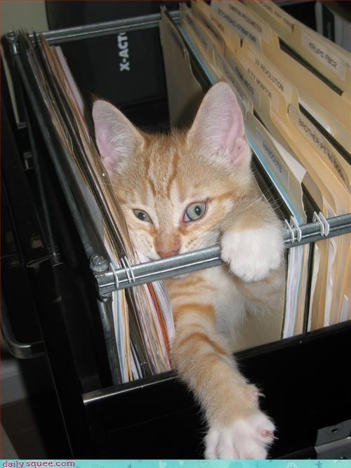 cat kitten noms - 3040548864