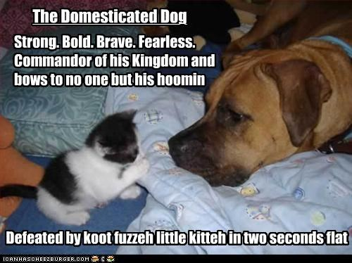 The Domesticated Dog Strong. Bold. Brave. Fearless. Commandor of his Kingdom and bows to no one but his hoomin Defeated by koot fuzzeh little kitteh in two seconds flat