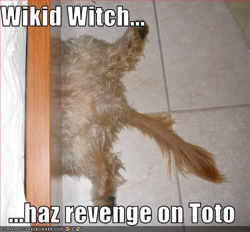 revenge,toto,witch,wizard of oz