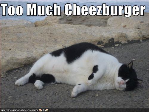 Cheezburger Image 3041122304