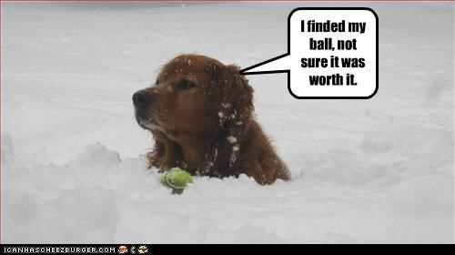 golden retriever,snow,tennis ball