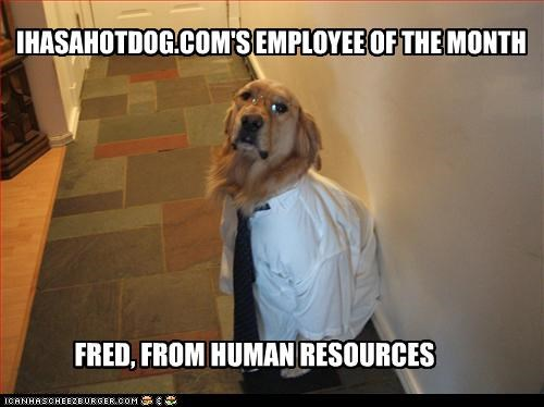 employee of the month,golden retriever,job,Office