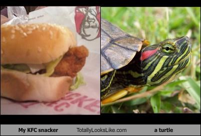 head kfc sandwich turtle