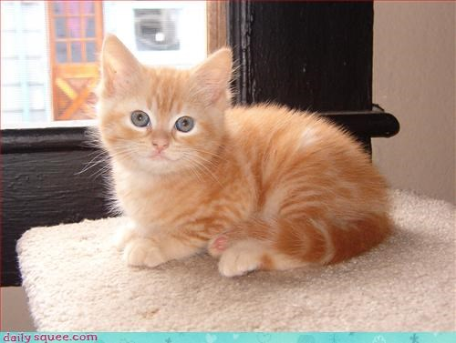 blonde cat kitten - 3043986176