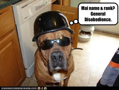 great dane,hat,helmet,military