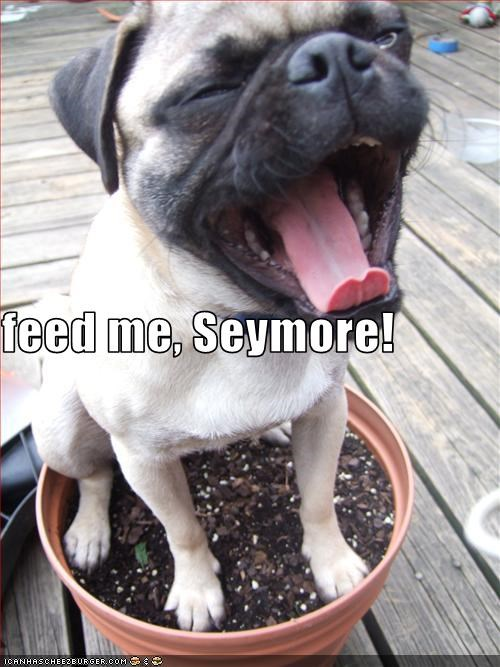 feed me, Seymore!