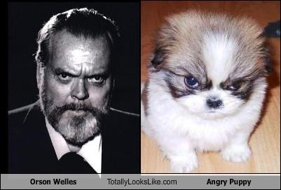 actor angry director dogs orson welles puppy