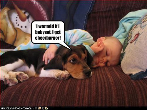 Cheezburger Image 3044479744
