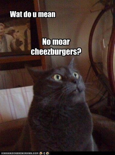 Cheezburger Image 3044557824