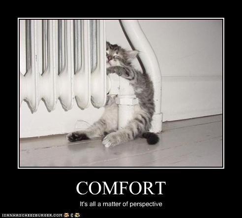 comfortable cute kitten weird - 3044683264