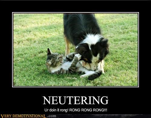 hilarious neutering pets things