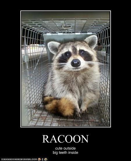 RACOON cute outside big teeth inside