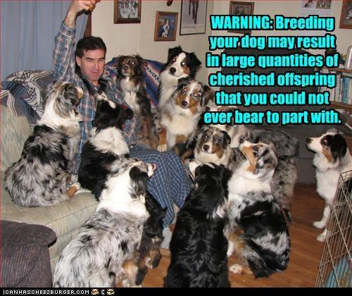 border collie breeding family large warning - 3046132224