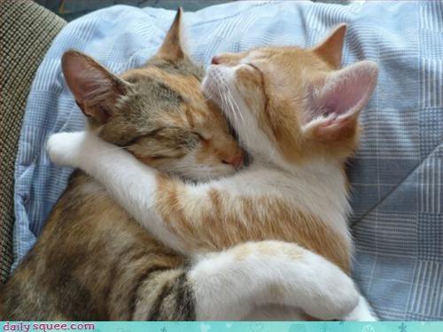 cat kitten sleepy - 3046604800