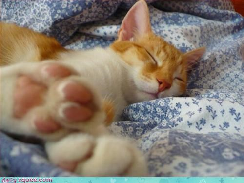 kitten,so cute,toes