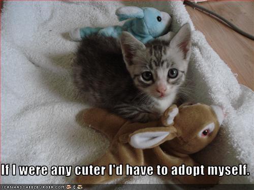adoption cute kitten stuffed animals - 3047255808