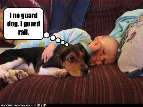 baby,beagle,guard dog,human,protection