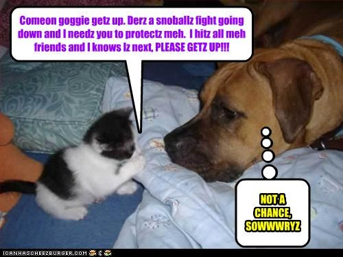 Comeon goggie getz up. Derz a snoballz fight going down and I needz you to protectz meh. I hitz all meh friends and I knows Iz next, PLEASE GETZ UP!!! NOT A CHANCE, SOWWWRYZ