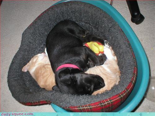 bff cat puppy - 3048563456