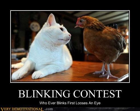 blinking contest,cat,chicken,eyes,poke,Terrifying