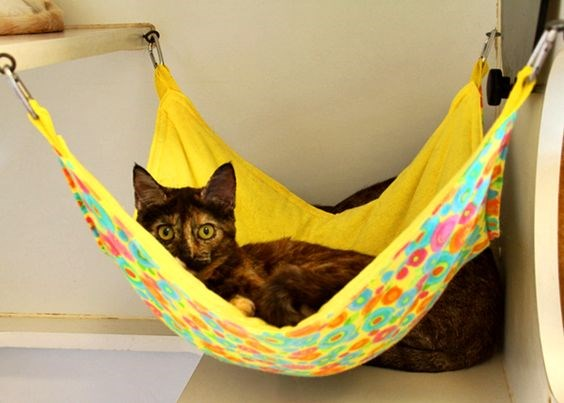 a photo of a cat just chilling in its colorful hammock - cover for a list about cats that like to sit in their hammocks