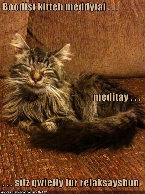 Boodist kitteh meddytai . . .  meditay . . .  . . . sitz qwietly fur relaksayshun