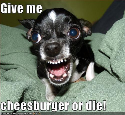 Cheezburger Image 3050838272