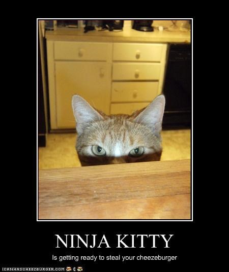 NINJA KITTY Is getting ready to steal your cheezeburger