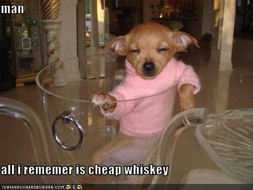 alcohol,chihuahua,drink,hangover