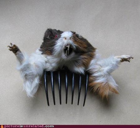 Dit-a-dee da de-de do do dee-ba-dede doe hamsters - 3051847680
