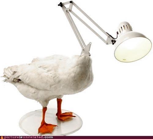 duckclock wtf - 3051859712