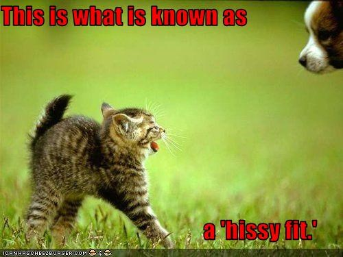 angry hissy fit kitten lolcats puppy tantrum whatbreed - 3052124416