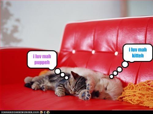 couch cuddle kitten love puppy sleeping - 3052217344