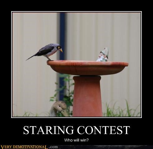 gnome,bird,staring contest
