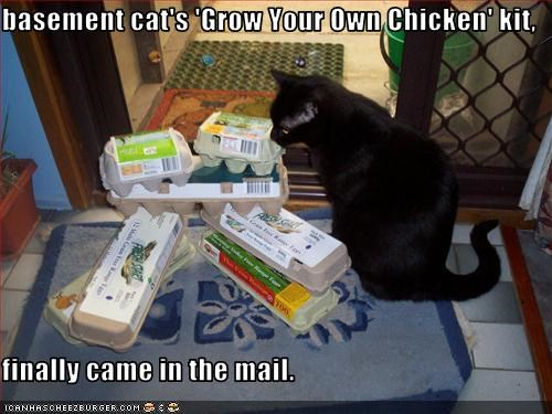 basement cat chicken plotting - 3053617920