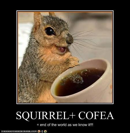 SQUIRREL+ COFEA = end of the world as we know it!!!