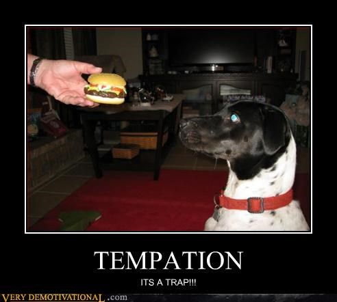 temptation,trap,dogs