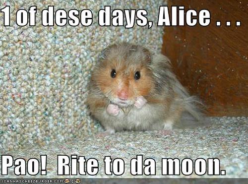 1 Of Dese Days Alice Pao Rite To Da Moon Cheezburger