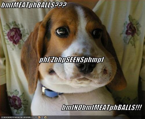 Cheezburger Image 3055399168