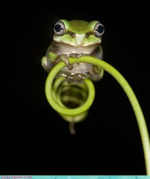 frog nature plants - 3055795968