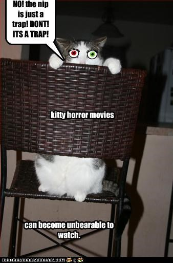 NO! the nip is just a trap! DONT! ITS A TRAP! kitty horror movies can become unbearable to watch.
